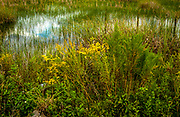 Everglades swamp grasses with white clouds and blue sky reflected in patches.
