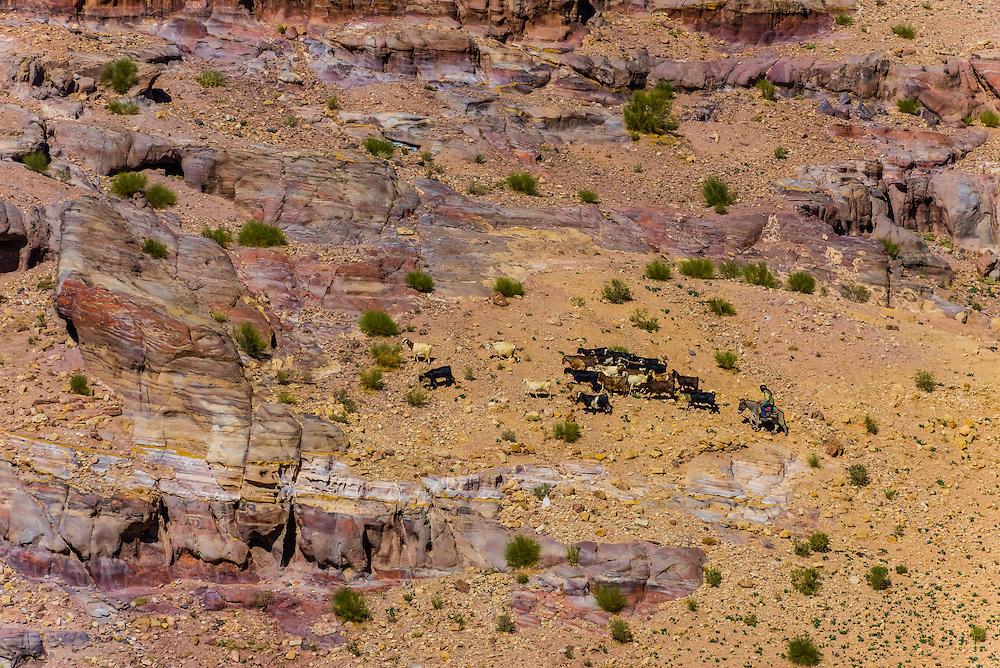 Herd of goats, Petra Archaeological Park (a UNESCO World Heritage Site), Petra, Jordan.
