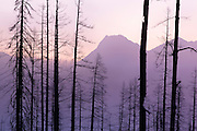 Burnt trees silouette mountain tops in Glacier National Park, Montana.