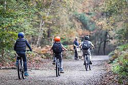 Three boys cycling through a woodland in Essex.