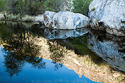 Saguaro cactus-studded hillsides are reflected in the still waters of Sabino Creek, Sabino Canyon, Tucson
