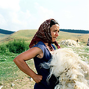 A Romanian woman wearing a headskarf holds a sheep's fleece after shearing, Poiana Sibiului, Romania. Whereas in most countries sheep are reared for wool and meat, in Romania these are seen as by-products and the real purpose of the flock is to produce branza or cheese.