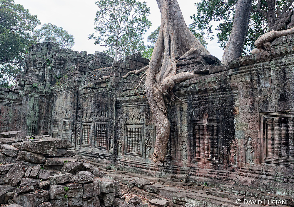 Preah Khan was built by Jayavarman VII and dedicated to his father. The five kilometer square large ancient city is managed by the World Monuments Fund.