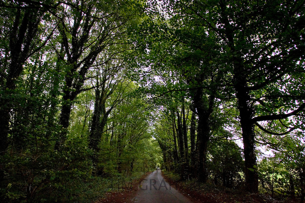 Country road through woodland, Gloucestershire, United Kingdom