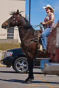 Lakeland High School senior Katie Russell saddles up her 17 year-old Morgan gelding, Skipper, on the last day of school on Tuesday. Russell had heard of an old law that required the school principal to tend to horses if a student rode into school and decided it would be a fitting way to finish off the school year.