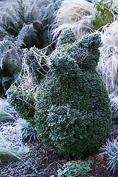 Hoar frost on cobweb covering box clipped into the shape of a teddy bear. Buxus sempervirens