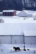 Amish farm team in snow, landscape, Lancaster Co. PA