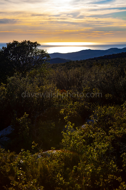 Plants, flowers and limestone karst in the Parc Natural del Garraf, Catalonia.