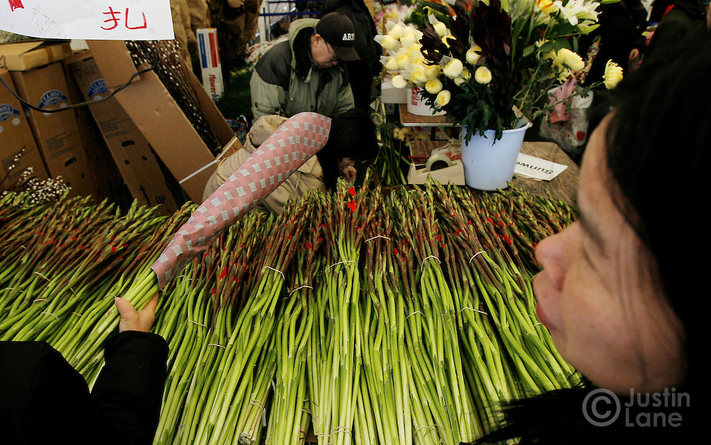 People shop for flowers at a flower market set up especially for Chinese New Year in the Chinatown neighborhood of New York, New York on Friday 16 February 2007. It is traditional for Chinese families to decorate their homes with flowers for New Year's celebrations. Chinese New Year officially begins on Sunday 18 February and this will the year of the pig.