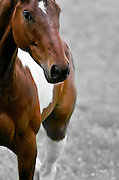 Horse in Oxfordshire field, United Kingdom
