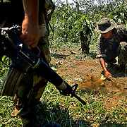 Counternarcotics forces in Chapare to eradicate coca patches that exceed the legal limit. Bolivia.
