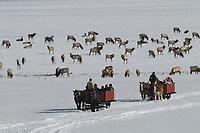 Sleigh rides on National Elk Refuge