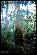 BRAZIL 20108: RUBBER TAPPERS