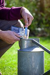 Applying Nemasys nematode leatherjacket killer to lawn. Mixing in watering can