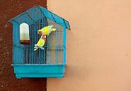 Birds in Cardenas, Matanzas, Cuba.