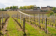 vineyard chateau d'yquem sauternes bordeaux france
