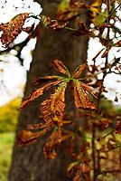 Autumn morning in Stratford upon Avon Warwickshire UK photo mark anton smith