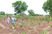 A woman is walking in a field of Yam in Fooshegu village, near Tamale, northern Ghana.