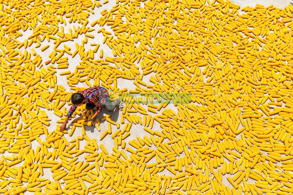 Aug. 7, 2017 - Chongqing, China - A farmer airs newly-harvested corn in Jinhe Village of southwest China's Chongqing Municipality.  (Credit Image: © Qu Mingbin/Xinhua via ZUMA Wire)
