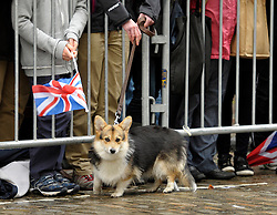 © Licensed to London News Pictures. 22/11/2012. Bristol, UK. Crowds and a corgi dog wait in King Street by the Bristol Old Vic Theatre for Queen Elizabeth ll and the Duke of Edinburgh's visit to Bristol.  22 November 2012..Photo credit : Simon Chapman/LNP