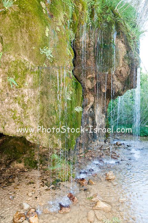 Delicate waterfall of fresh spring water near the Ermita de Sta Elena, Pyrenees Mountains, Huesca province, Aragon, Spain