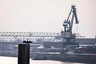 Europe, Germany, Cologne, crane in the Rhine harbor in the district Deutz, cormorant<br /> <br /> Europa, Deutschland, Koeln, Kran im Deutzer Hafen, Kormoran.