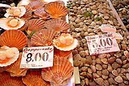 Fresh Shell fish - clams, scallops - Chioggia - Venice Italy .<br /> <br /> Visit our ITALY HISTORIC PLACES PHOTO COLLECTION for more   photos of Italy to download or buy as prints https://funkystock.photoshelter.com/gallery-collection/2b-Pictures-Images-of-Italy-Photos-of-Italian-Historic-Landmark-Sites/C0000qxA2zGFjd_k