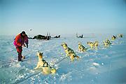 Feeding huskies, dog sledging and skiing across Greenland icecap, Arctic