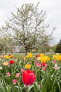 Hamptonburgh, New York - Flowers and trees are blooming at the Orange County Arboretum at Thomas Bull Memorial Park in Hamptonburgh.