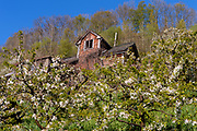 Old house and cherry trees at Ullensvang, Hardanger, Norway, in May 2015.