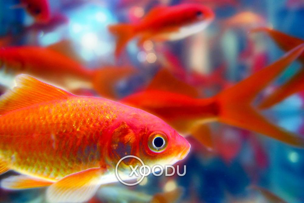 Goldfish swims by deep space, Brisbane, Australia (August 2002)