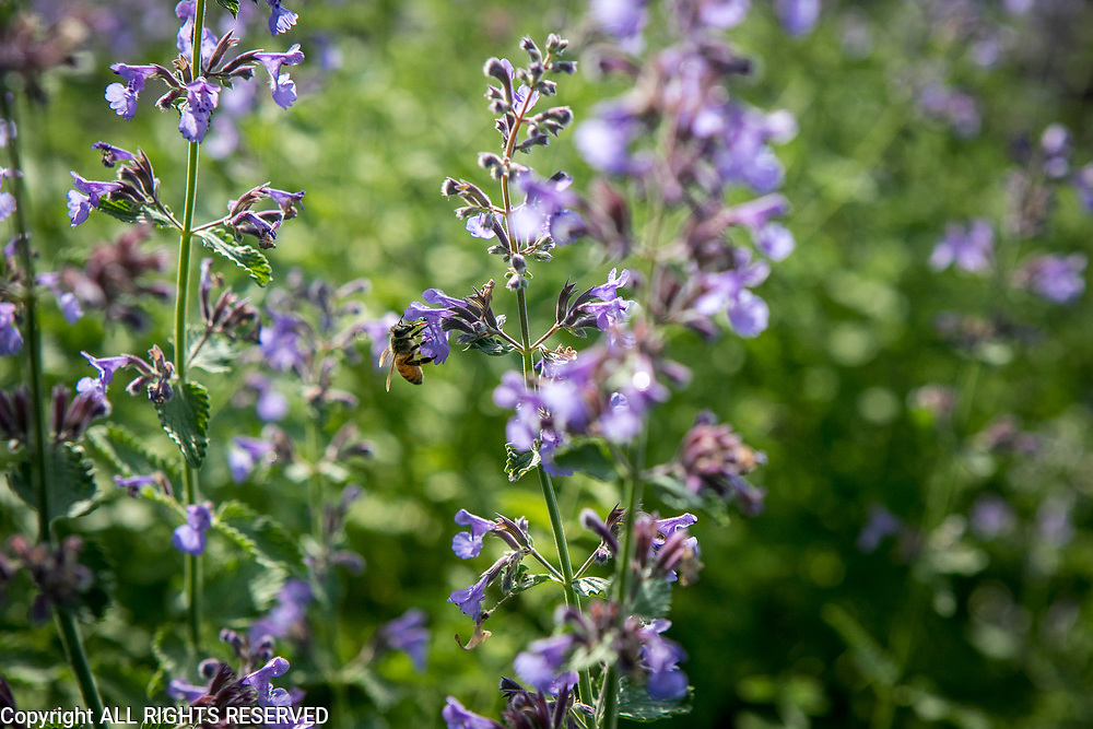Bees and flowers in the spring.