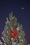 Vertical of pine tree with chili heart and moon