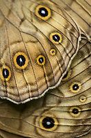 Moth-wing detail, boreal forest. Yichun city, Heilongjiang Province, China