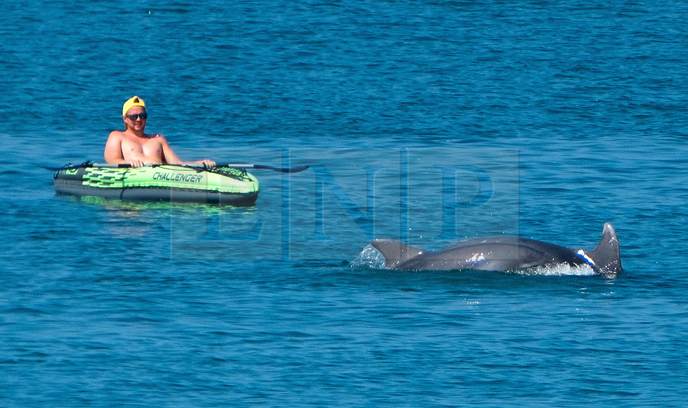 © Licensed to London News Pictures. 05/08/2018. Aberystwyth. UK. Rowers on the sea get a close up view of the Cardigan Bay  dolphins as they cavort off the beach in  Aberystwyth on a bright, warm and sunny Saturday morning  as the UK wide heatwave continues. Photo credit: Keith Morris/LNP