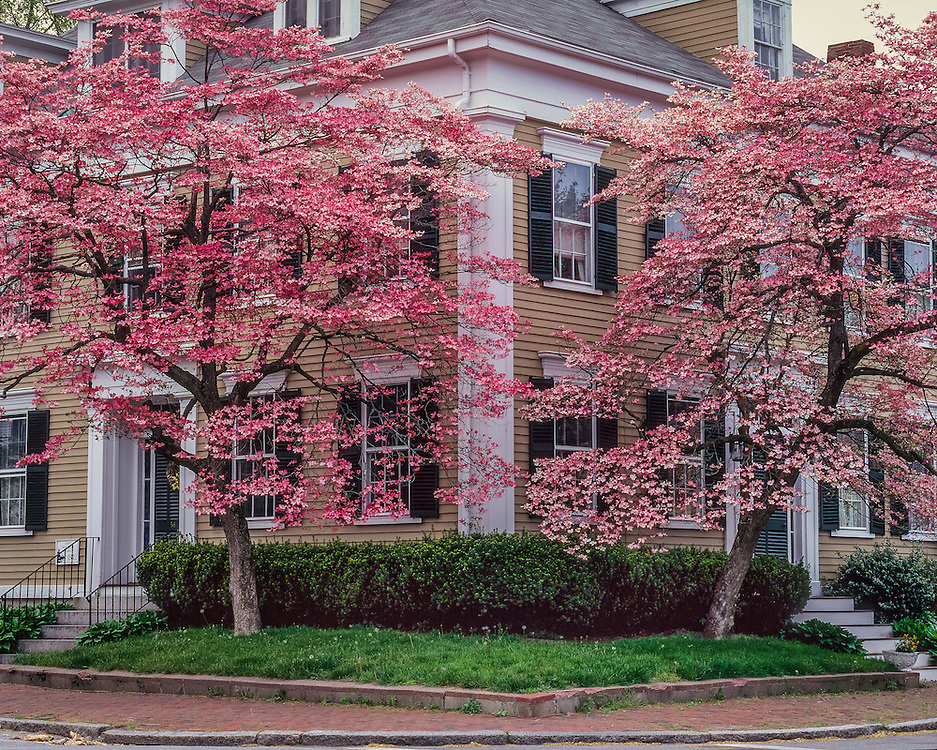 Sea Captain William Graves house, 1842, and red flowering dogwoods in spring, Newburyport, MA