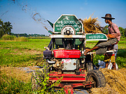 "21 NOVEMBER 2017 - MAUBIN, AYEYARWADY REGION, MYANMAR: A worker operates a threshing machine, separating rice from the chaff, in the Ayeyarwady  Delta. Myanmar is the world's sixth largest rice producer and more than half of Myanmar's arable land is used for rice cultivation. The Ayeyarwady Delta is the most important rice growing region and is sometimes called ""Myanmar's Granary."" The UN Food and Agriculture Organization (FAO) is predicting that the 2017 harvest will increase over 2016 and that exports will surge to 1.8 million tonnes.   PHOTO BY JACK KURTZ"