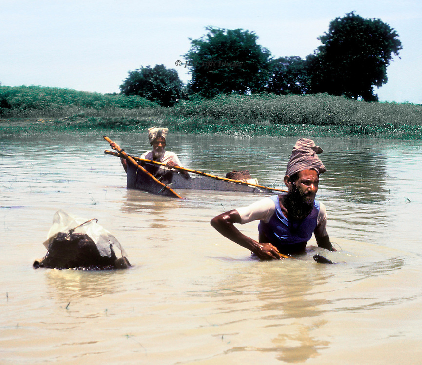 Two Bangladeshi fisherman with nets determinedly pursue fish in the muddy waters of the Buriganga River near Dhaka.  They are wading in water up to their waists.