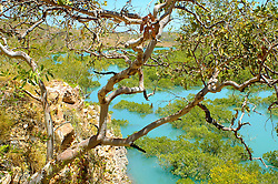 An elevated view of the mangroves from a hillside on the Buccaneer Archipelago, Kimberley coast.