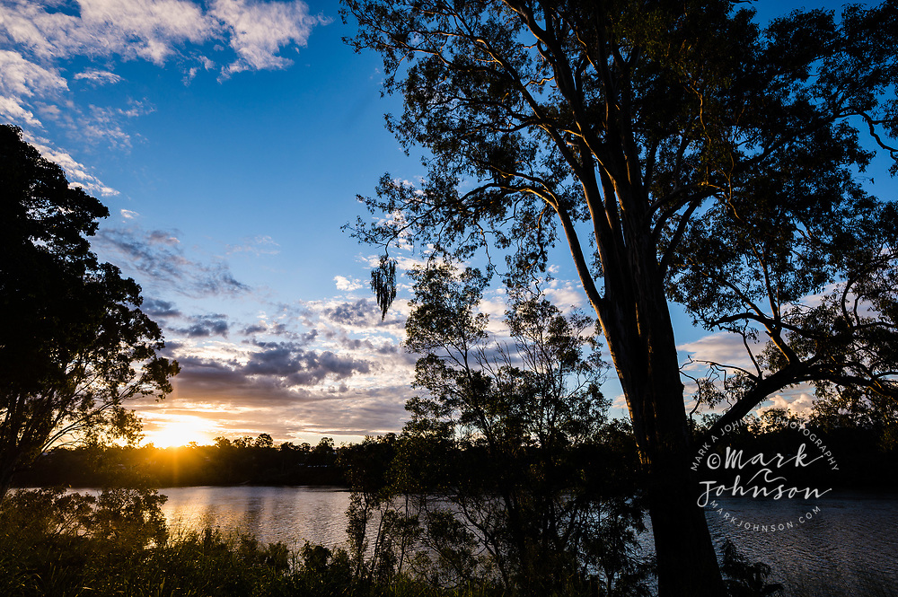 Eucalyptus tree on the banks of the Brisbane River at sunset, Brisbane, Queensland, Australia