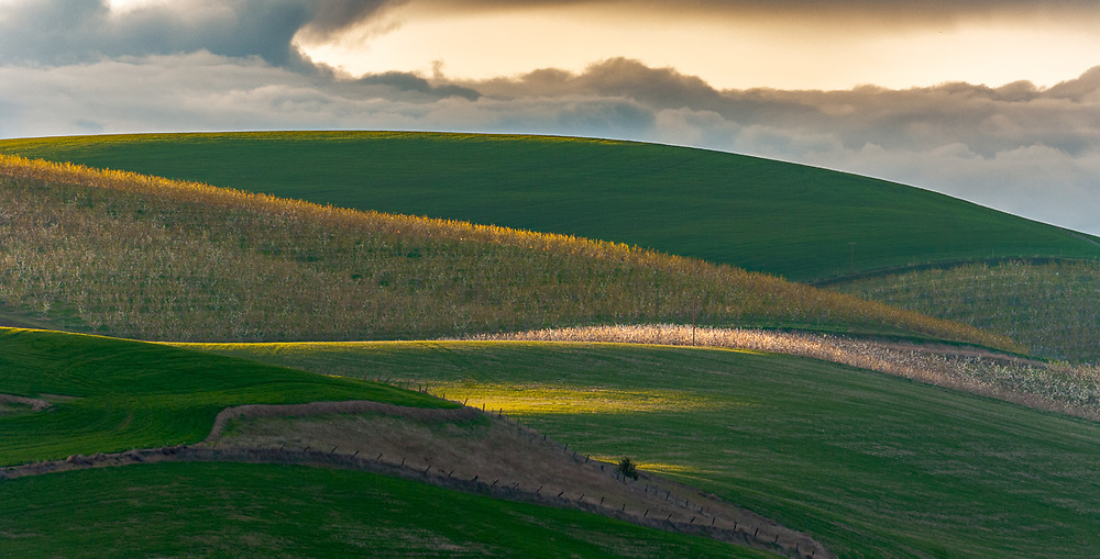 Agricultural field, evening light, April, Columbia River Basin, Washington, USA
