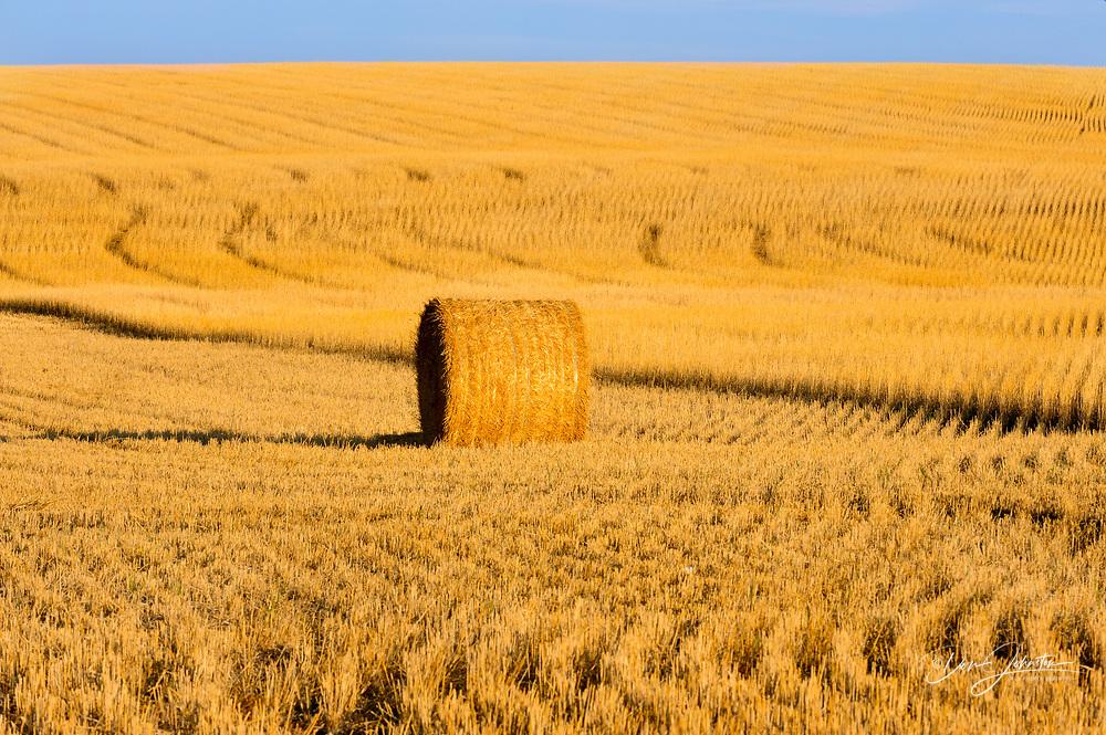 Hay roll and stubblefield mowing patterns, near Sceptre, Saskatchewan, Canada