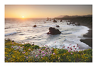 Wildflowers on bluff edge at sunset, Sonoma Coast State Park, California