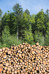 Stack of wooden logs in the forest, Bavaria, Germany