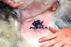 Tattoo On Dog For Identification