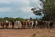 Vaquero on horseback<br /> Bina Hill<br /> Savannah<br /> Rupununi<br /> GUYANA<br /> South America