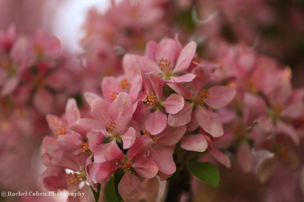 """""""Wind Blossom"""""""