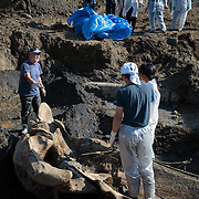 Proper preparations for lifting the upper skull of the whale from the excavation put were required to ensure integrity of the skull structure.