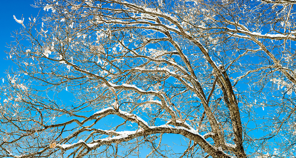 This photograph is a high resolution panorama made of 4 separate images stitched together. The sun light shining on the tree, paired with the bright reflected light from the snow beneath and the snow lining each branch creates a simple but unique image.