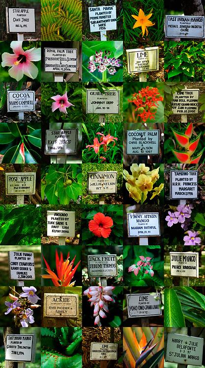 Celebrity Tree Planting - Goldeneye Jamaica